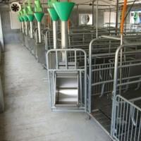 广东自动料线订制厂家-沧州万晟畜牧制造猪用自动料线设备